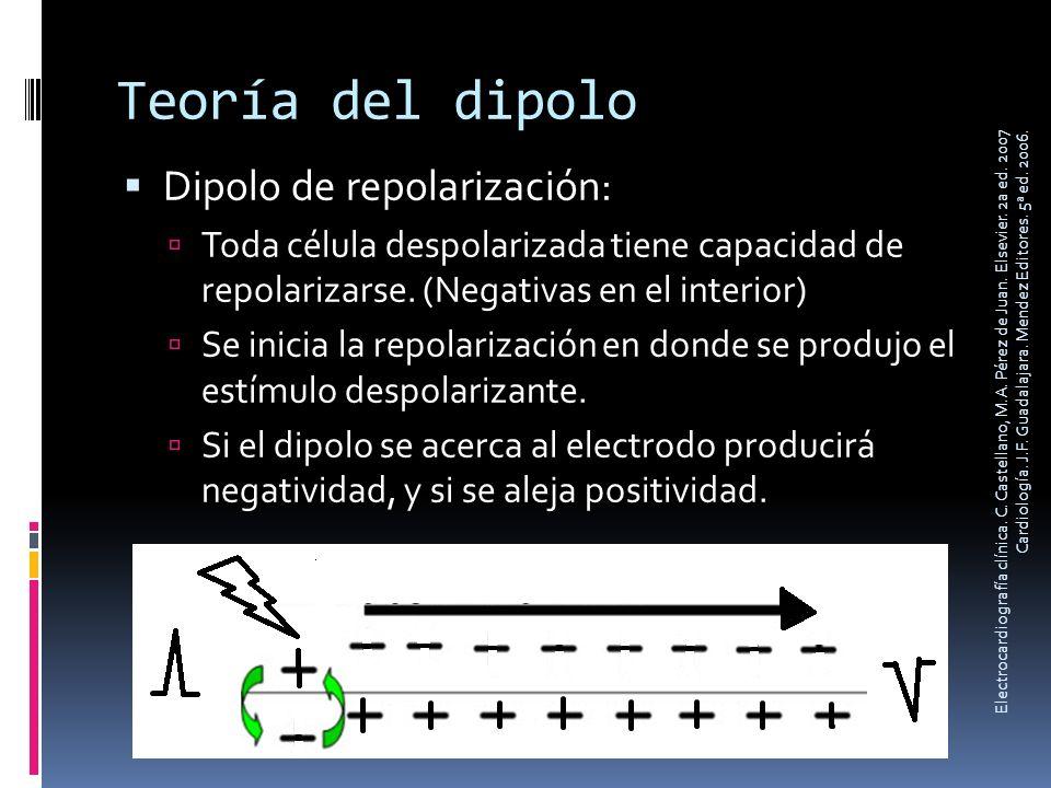 Teoría del dipolo Dipolo de repolarización: Toda célula despolarizada tiene capacidad de repolarizarse. (Negativas en el interior) Se inicia la repola