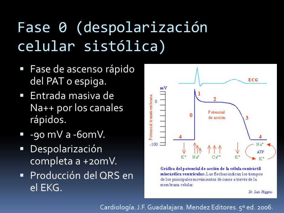 Fase 0 (despolarización celular sistólica) Fase de ascenso rápido del PAT o espiga. Entrada masiva de Na++ por los canales rápidos. -90 mV a -60mV. De