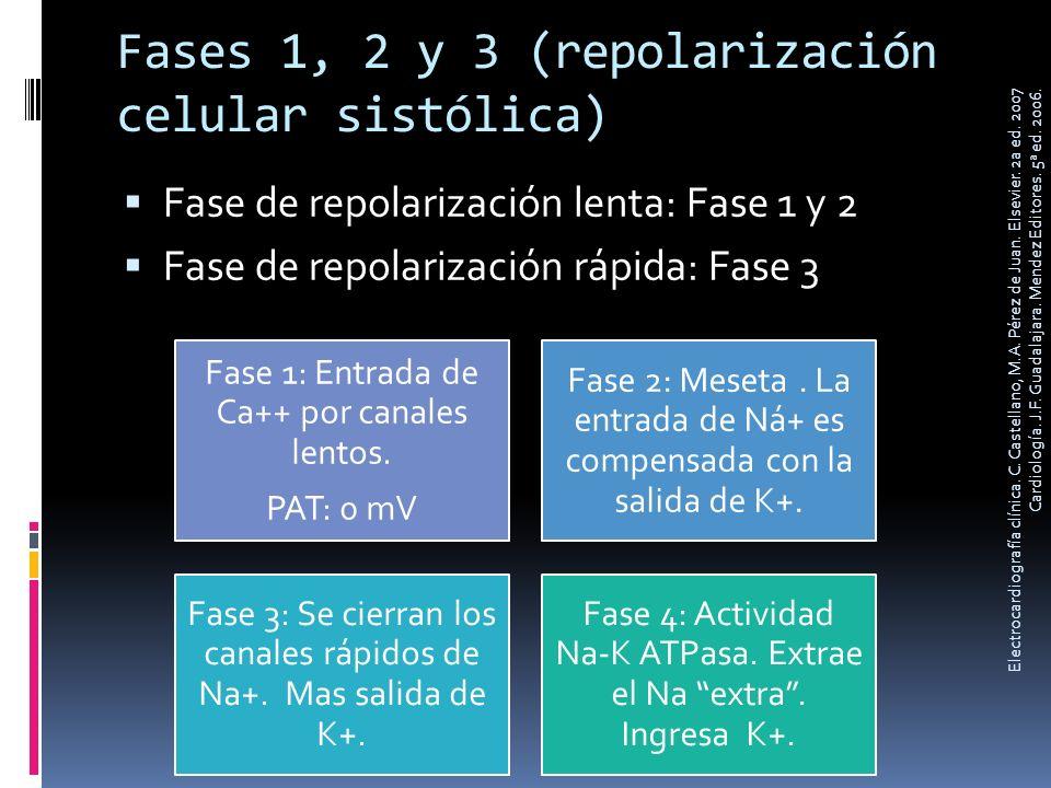Fases 1, 2 y 3 (repolarización celular sistólica) Fase de repolarización lenta: Fase 1 y 2 Fase de repolarización rápida: Fase 3 Fase 1: Entrada de Ca
