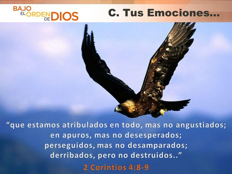 © 2013 Todos los derechos reservados ® Bajo el Orden de Dios es una marca registrada C. Tus Emociones…