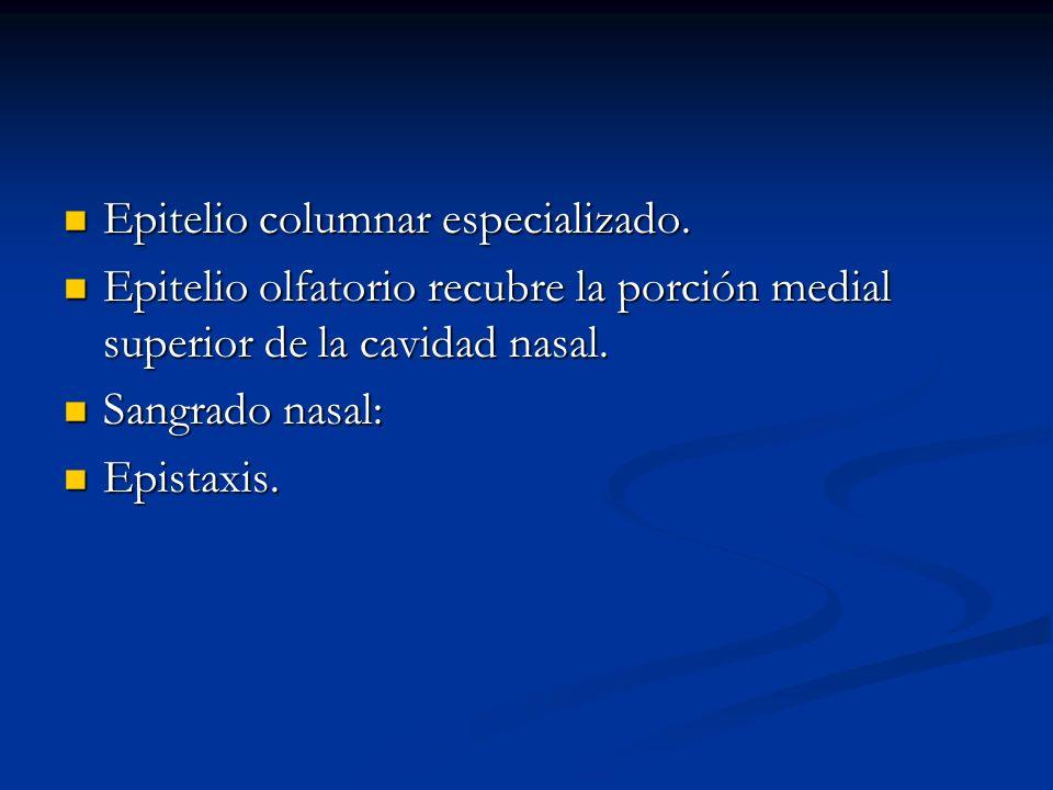 Epitelio columnar especializado. Epitelio columnar especializado. Epitelio olfatorio recubre la porción medial superior de la cavidad nasal. Epitelio