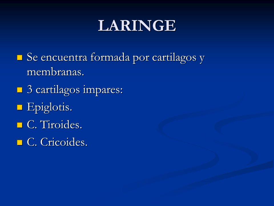 LARINGE Se encuentra formada por cartilagos y membranas. Se encuentra formada por cartilagos y membranas. 3 cartilagos impares: 3 cartilagos impares: