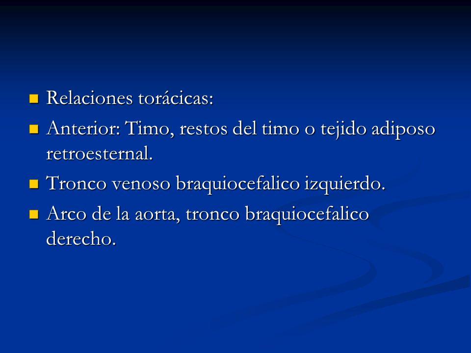 Relaciones torácicas: Relaciones torácicas: Anterior: Timo, restos del timo o tejido adiposo retroesternal. Anterior: Timo, restos del timo o tejido a