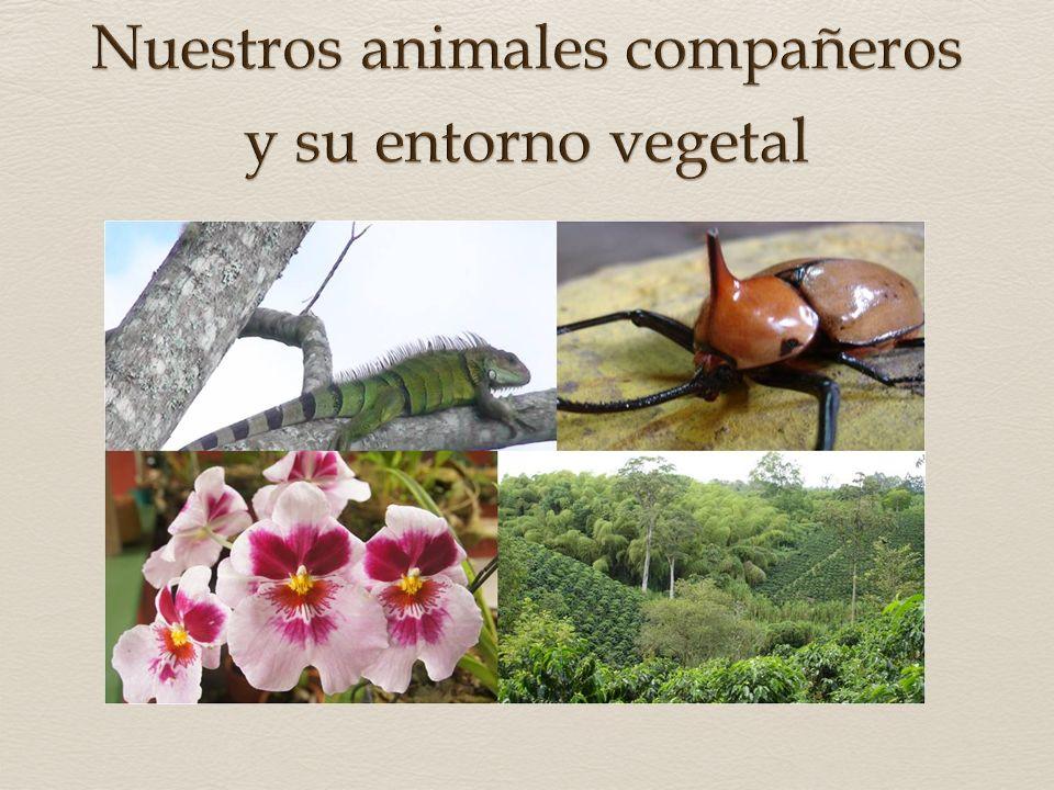 La gran oferta ambiental en nuestras fincas propicia condiciones excepcionales gracias a las cuales hace presencia un amplio número de especies migrat