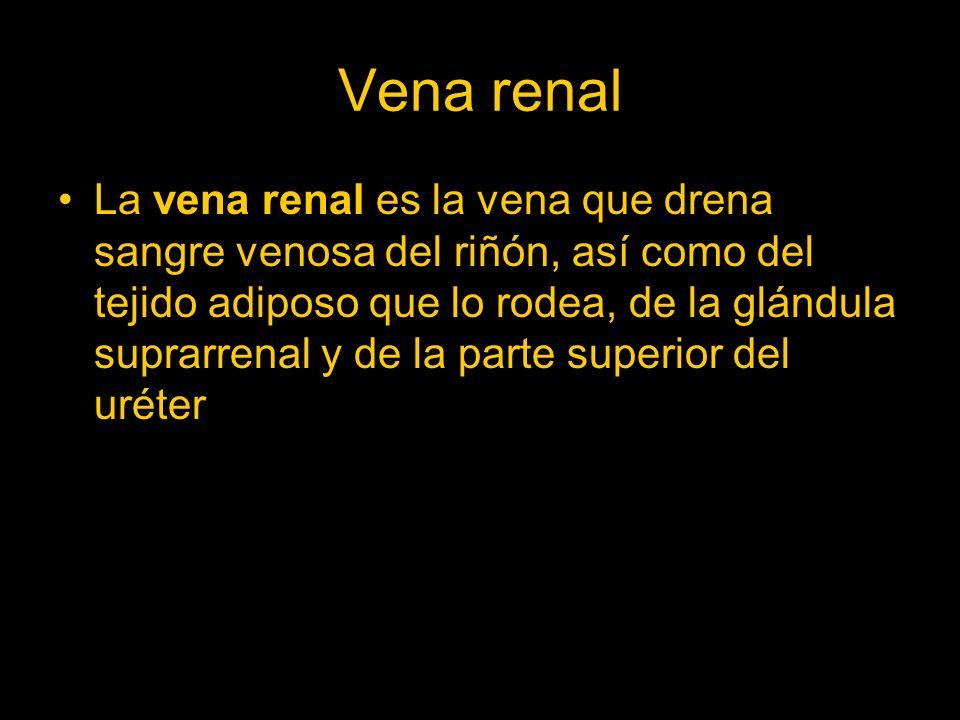 Vena renal La vena renal es la vena que drena sangre venosa del riñón, así como del tejido adiposo que lo rodea, de la glándula suprarrenal y de la pa