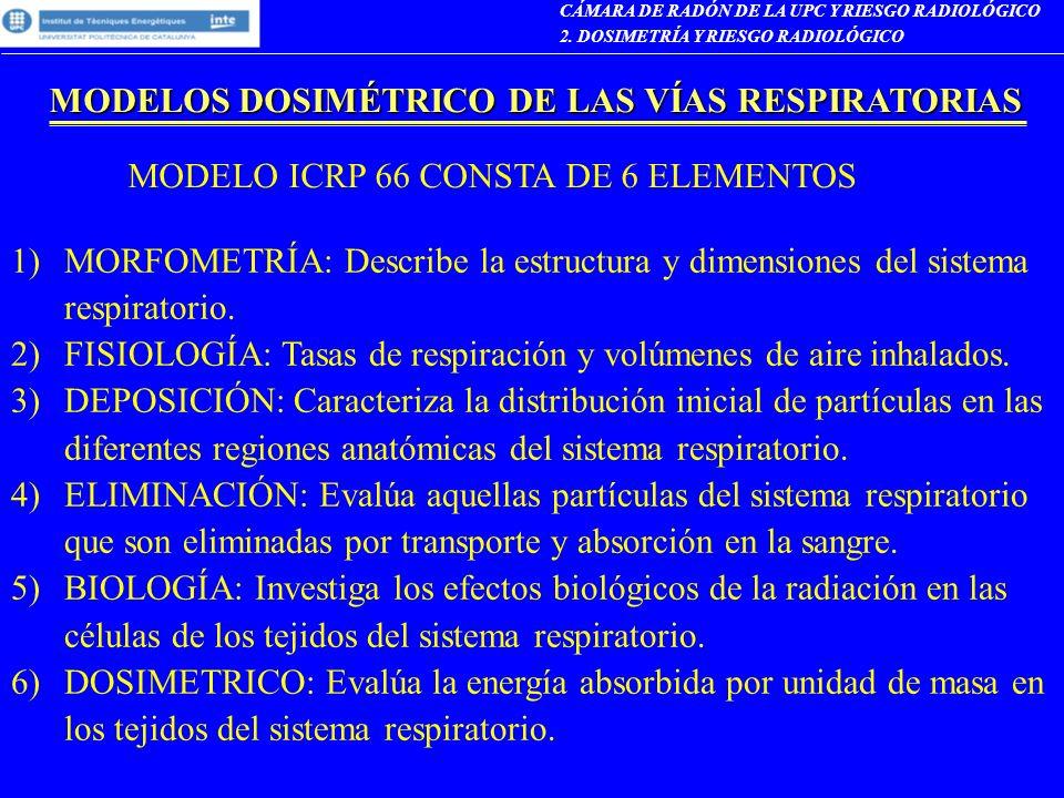 MODELOS DOSIMÉTRICO DE LAS VÍAS RESPIRATORIAS CÁMARA DE RADÓN DE LA UPC Y RIESGO RADIOLÓGICO 2. DOSIMETRÍA Y RIESGO RADIOLÓGICO 1)MORFOMETRÍA: Describ