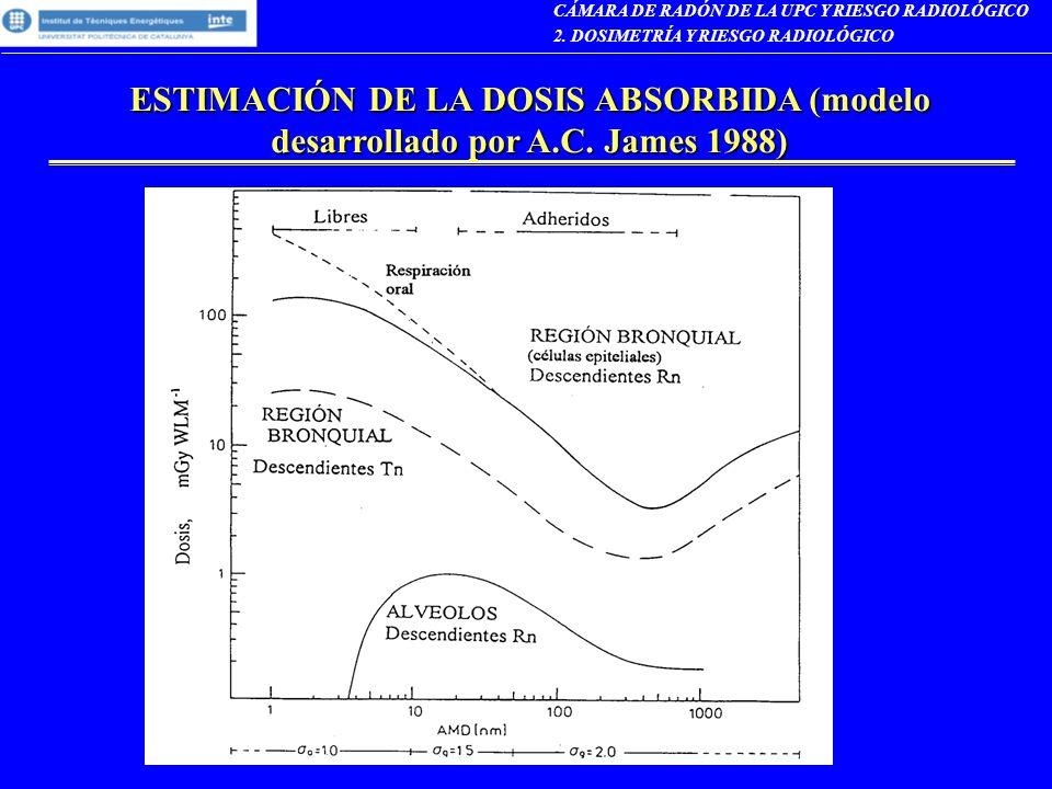 ESTIMACIÓN DE LA DOSIS ABSORBIDA (modelo desarrollado por A.C. James 1988) CÁMARA DE RADÓN DE LA UPC Y RIESGO RADIOLÓGICO 2. DOSIMETRÍA Y RIESGO RADIO