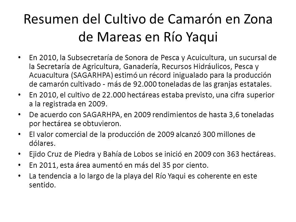 Resumen del Cultivo de Camarón en Zona de Mareas en Río Yaqui En 2010, la Subsecretaría de Sonora de Pesca y Acuicultura, un sucursal de la Secretaría de Agricultura, Ganadería, Recursos Hidráulicos, Pesca y Acuacultura (SAGARHPA) estimó un récord inigualado para la producción de camarón cultivado - más de 92.000 toneladas de las granjas estatales.