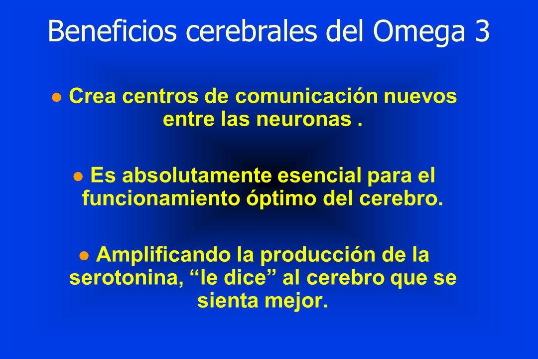 l Crea centros de comunicación nuevos entre las neuronas. l Es absolutamente esencial para el funcionamiento óptimo del cerebro. l Amplificando la pro
