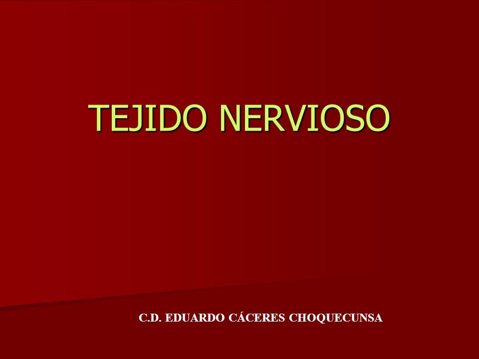 TEJIDO NERVIOSO C.D. EDUARDO CÁCERES CHOQUECUNSA