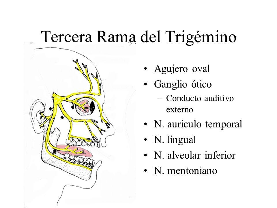 Tercera Rama del Trigémino Agujero oval Ganglio ótico –Conducto auditivo externo N. aurículo temporal N. lingual N. alveolar inferior N. mentoniano