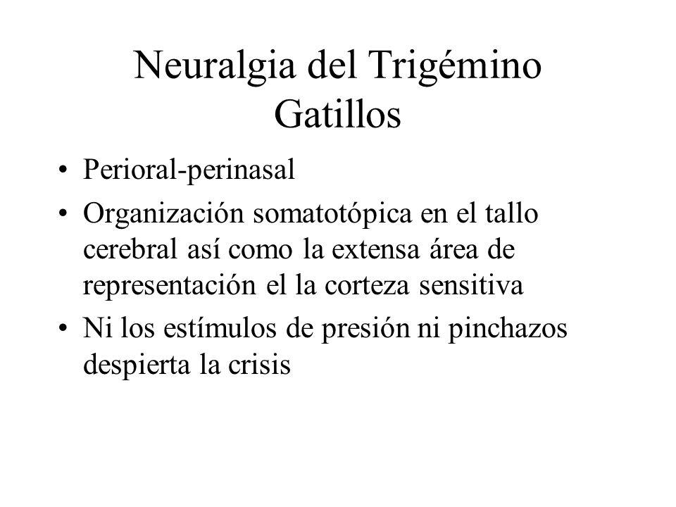 Neuralgia del Trigémino Gatillos Perioral-perinasal Organización somatotópica en el tallo cerebral así como la extensa área de representación el la co