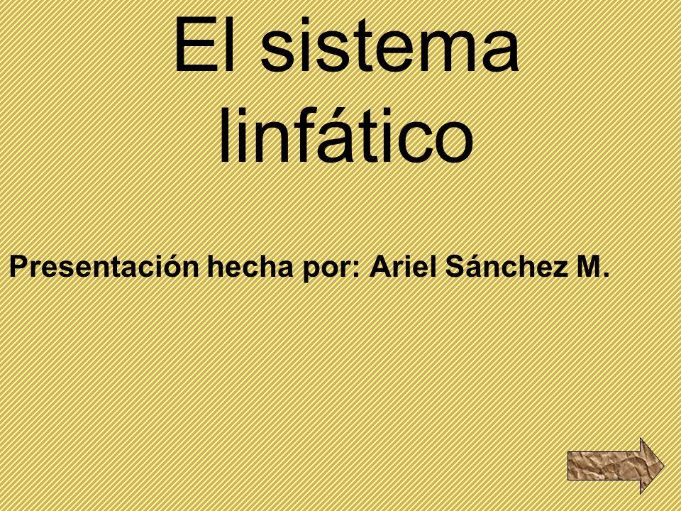 El sistema linfático Presentación hecha por: Ariel Sánchez M.
