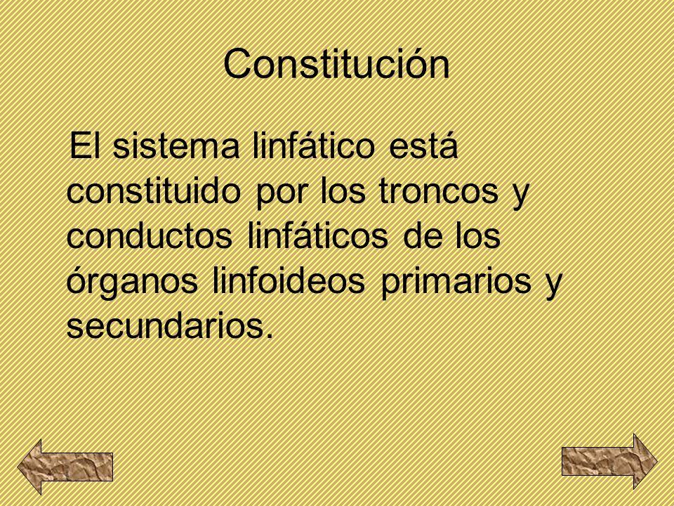 Constitución El sistema linfático está constituido por los troncos y conductos linfáticos de los órganos linfoideos primarios y secundarios.