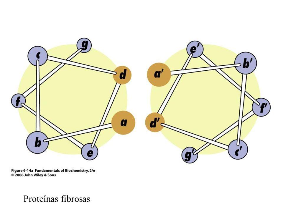 Proteínas fibrosas