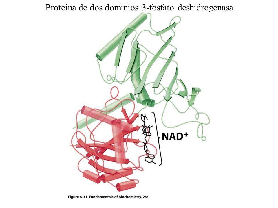 Proteína de dos dominios 3-fosfato deshidrogenasa