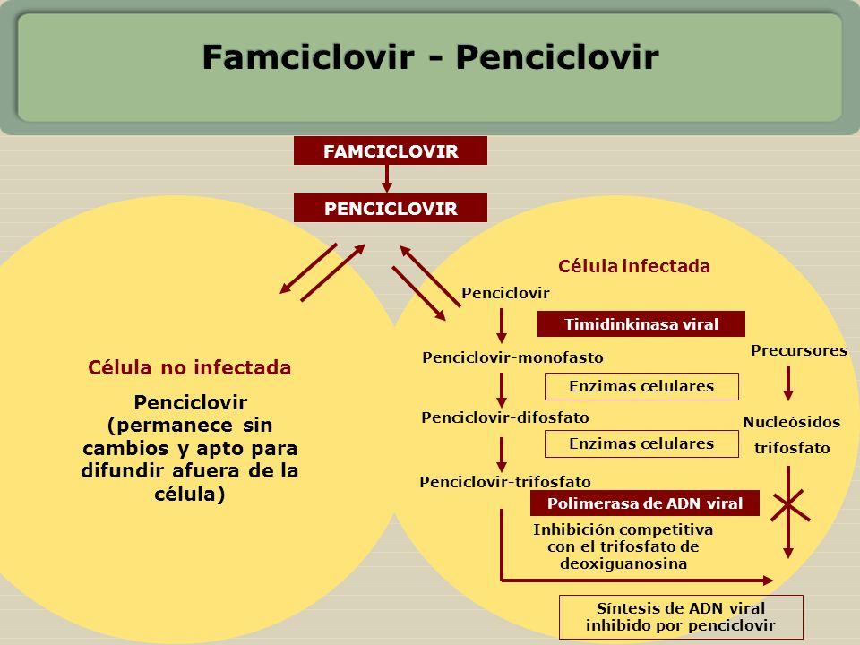 Famciclovir - Penciclovir PENCICLOVIR Célula infectada Penciclovir Penciclovir-monofasto Penciclovir-difosfato Penciclovir-trifosfato Enzimas celulare