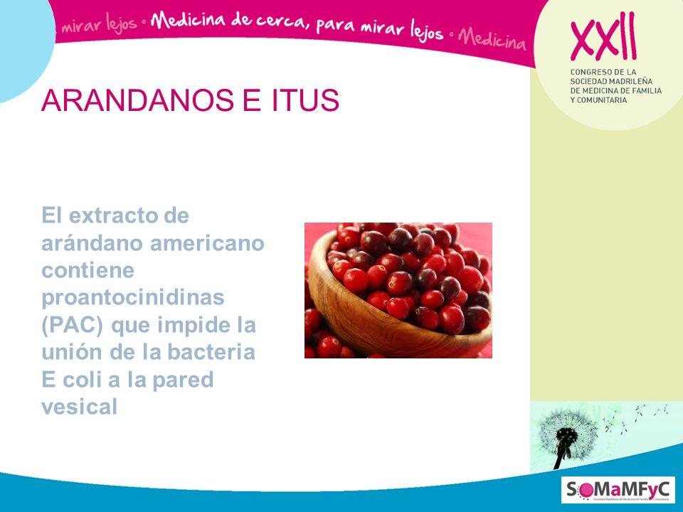 El extracto de arándano americano contiene proantocinidinas (PAC) que impide la unión de la bacteria E coli a la pared vesical ARANDANOS E ITUS