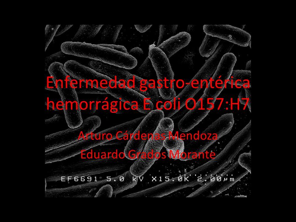 Enfermedad gastro-entérica hemorrágica E coli O157:H7 Arturo Cárdenas Mendoza Eduardo Grados Morante