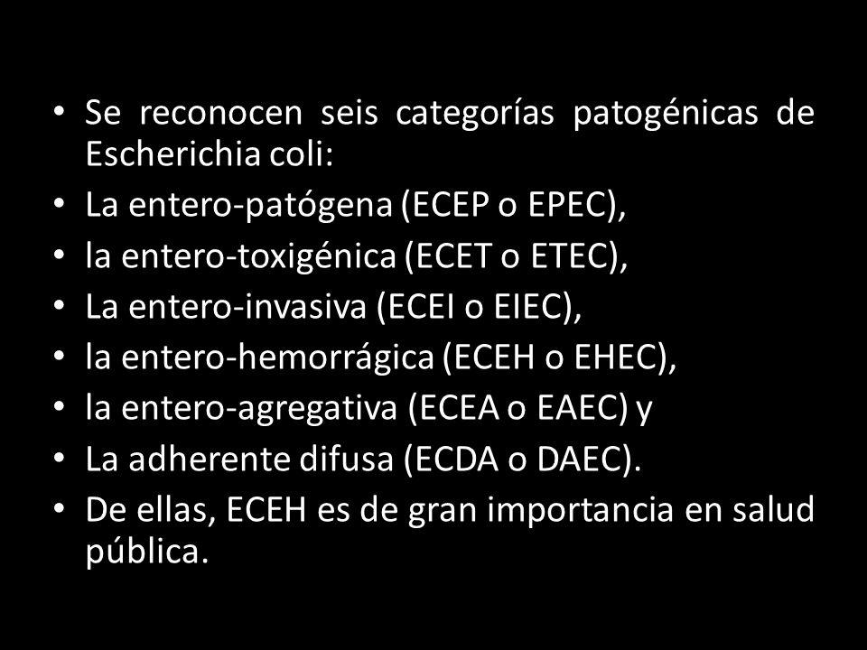 Se reconocen seis categorías patogénicas de Escherichia coli: La entero-patógena (ECEP o EPEC), la entero-toxigénica (ECET o ETEC), La entero-invasiva