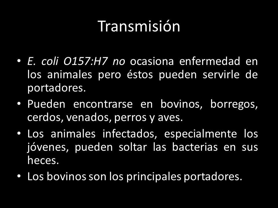 Transmisión E. coli O157:H7 no ocasiona enfermedad en los animales pero éstos pueden servirle de portadores. Pueden encontrarse en bovinos, borregos,