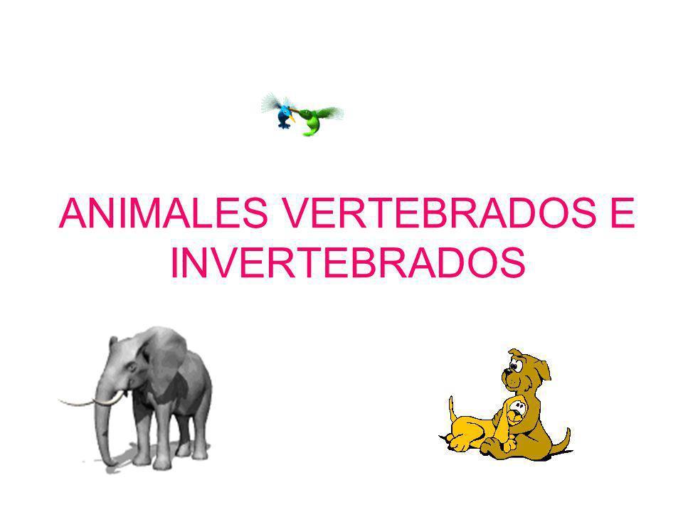 ¿Sabías que….muchos animales son parecidos, como los perros y los lobos.