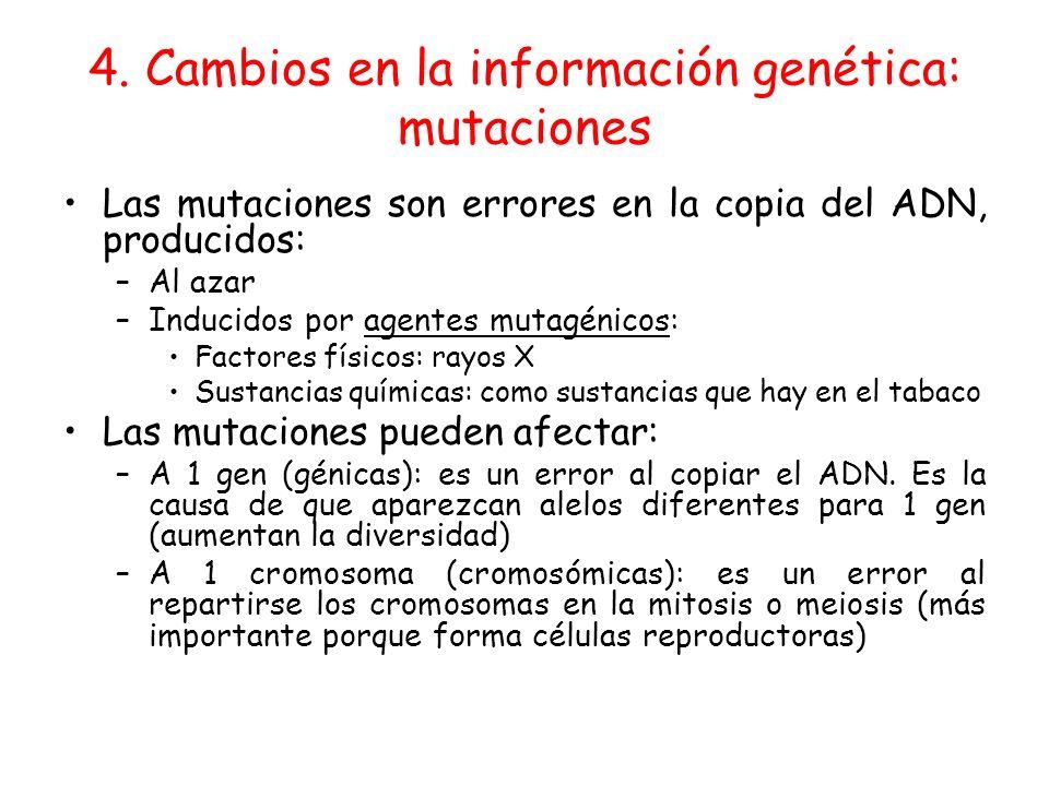 4. Cambios en la información genética: mutaciones Las mutaciones son errores en la copia del ADN, producidos: –Al azar –Inducidos por agentes mutagéni