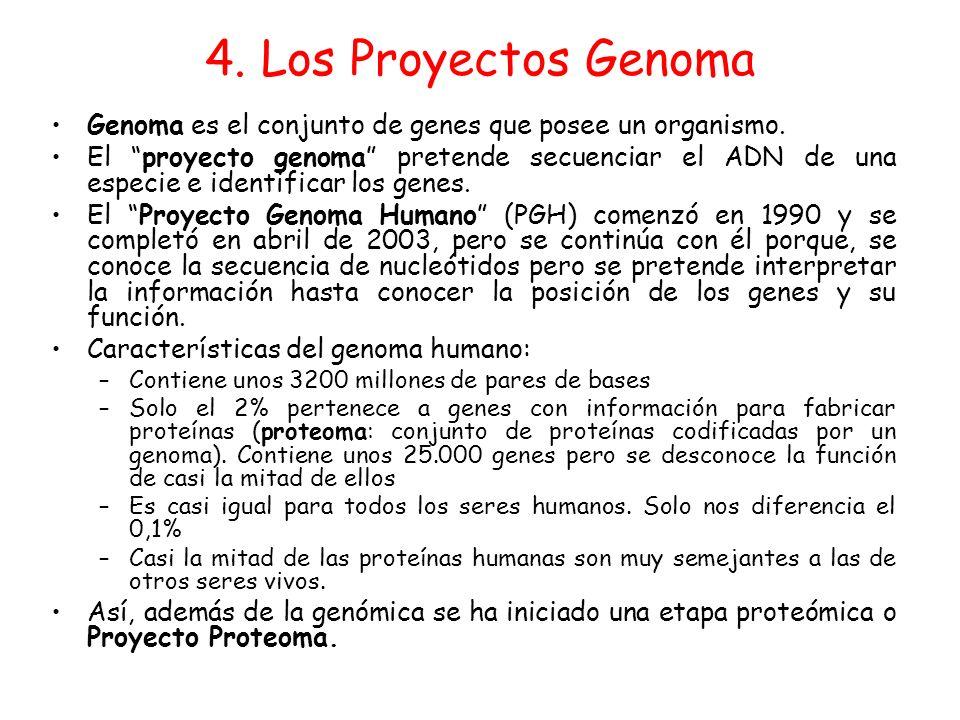 4. Los Proyectos Genoma Genoma es el conjunto de genes que posee un organismo. El proyecto genoma pretende secuenciar el ADN de una especie e identifi