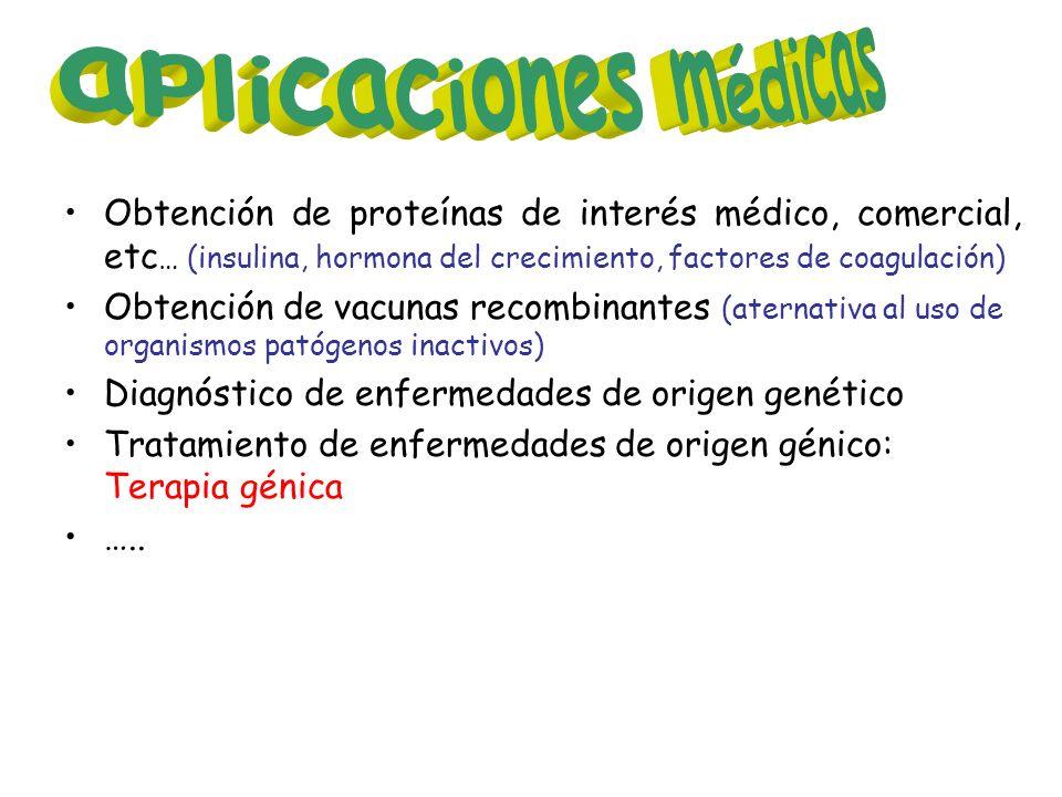Obtención de proteínas de interés médico, comercial, etc … (insulina, hormona del crecimiento, factores de coagulación) Obtención de vacunas recombina