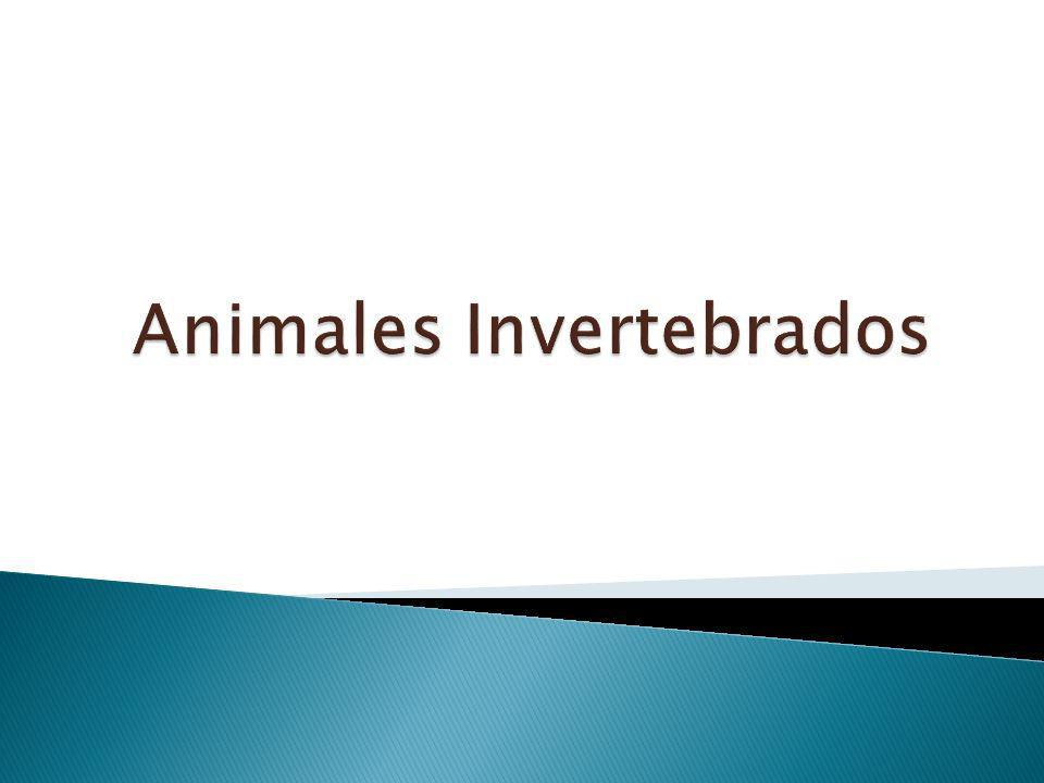 Los animales sin columna vertebral son animales invertebrados.