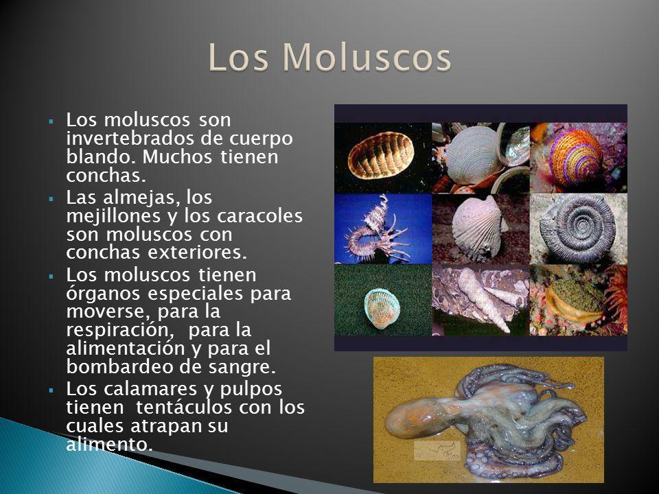 Los moluscos son invertebrados de cuerpo blando. Muchos tienen conchas. Las almejas, los mejillones y los caracoles son moluscos con conchas exteriore