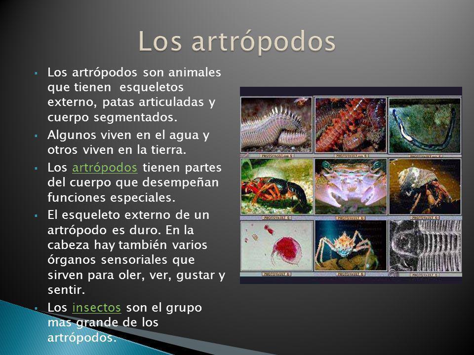 Los artrópodos son animales que tienen esqueletos externo, patas articuladas y cuerpo segmentados. Algunos viven en el agua y otros viven en la tierra