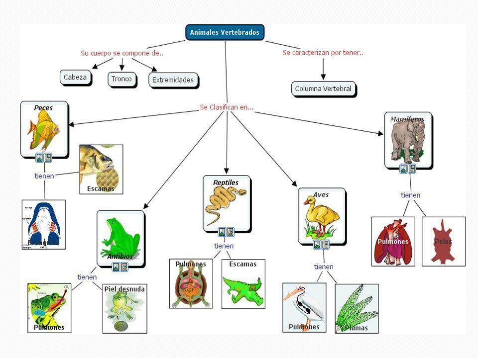 A los animales con columna vertebral se les llama vertebrados.