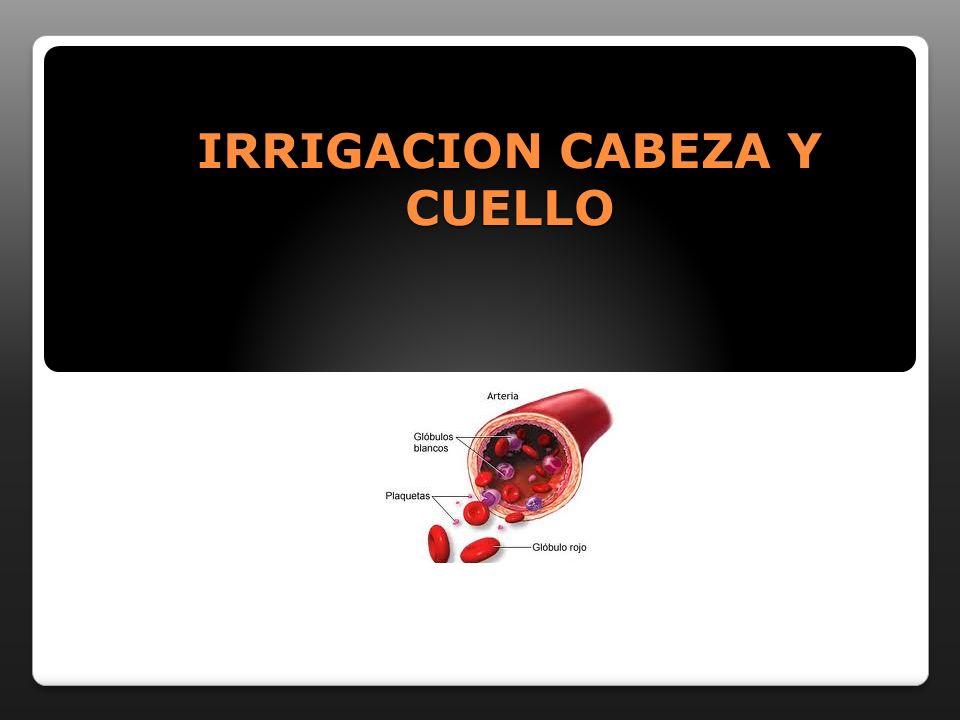 IRRIGACION CABEZA Y CUELLO
