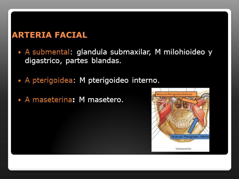 ARTERIA FACIAL A submental: glandula submaxilar, M milohioideo y digastrico, partes blandas. A pterigoidea: M pterigoideo interno. A maseterina: M mas