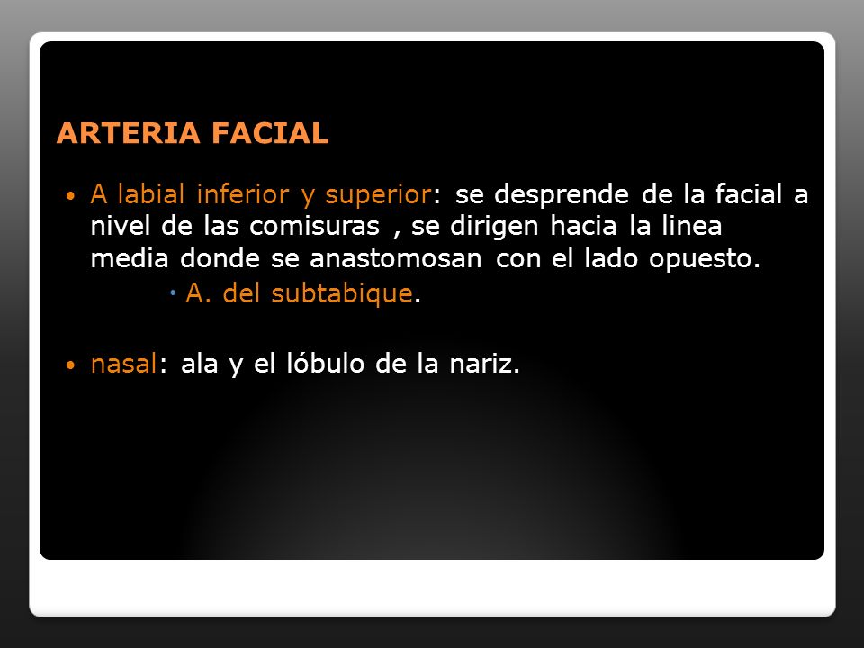 ARTERIA FACIAL A labial inferior y superior: se desprende de la facial a nivel de las comisuras, se dirigen hacia la linea media donde se anastomosan