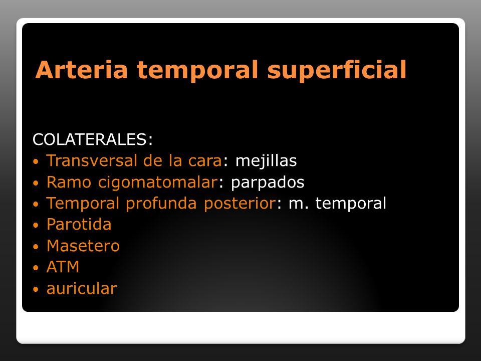 Arteria temporal superficial COLATERALES: Transversal de la cara: mejillas Ramo cigomatomalar: parpados Temporal profunda posterior: m. temporal Parot