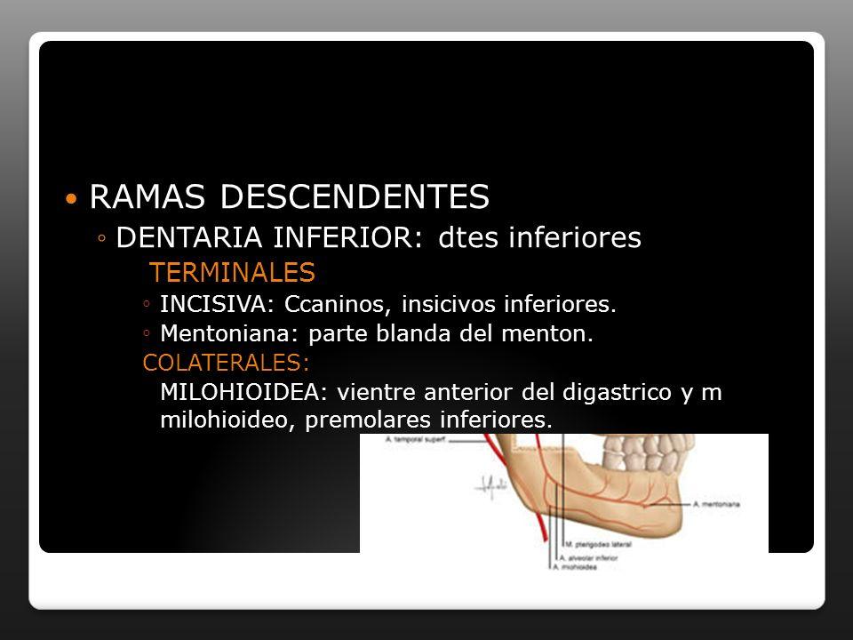 RAMAS DESCENDENTES DENTARIA INFERIOR: dtes inferiores TERMINALES INCISIVA: Ccaninos, insicivos inferiores. Mentoniana: parte blanda del menton. COLATE
