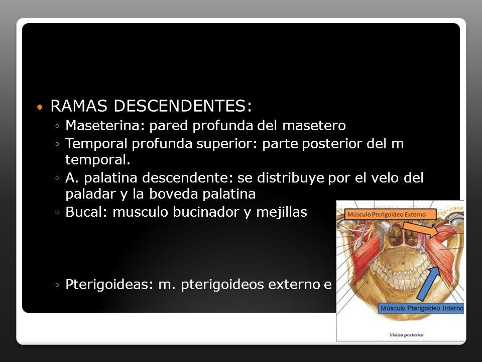 RAMAS DESCENDENTES: Maseterina: pared profunda del masetero Temporal profunda superior: parte posterior del m temporal. A. palatina descendente: se di