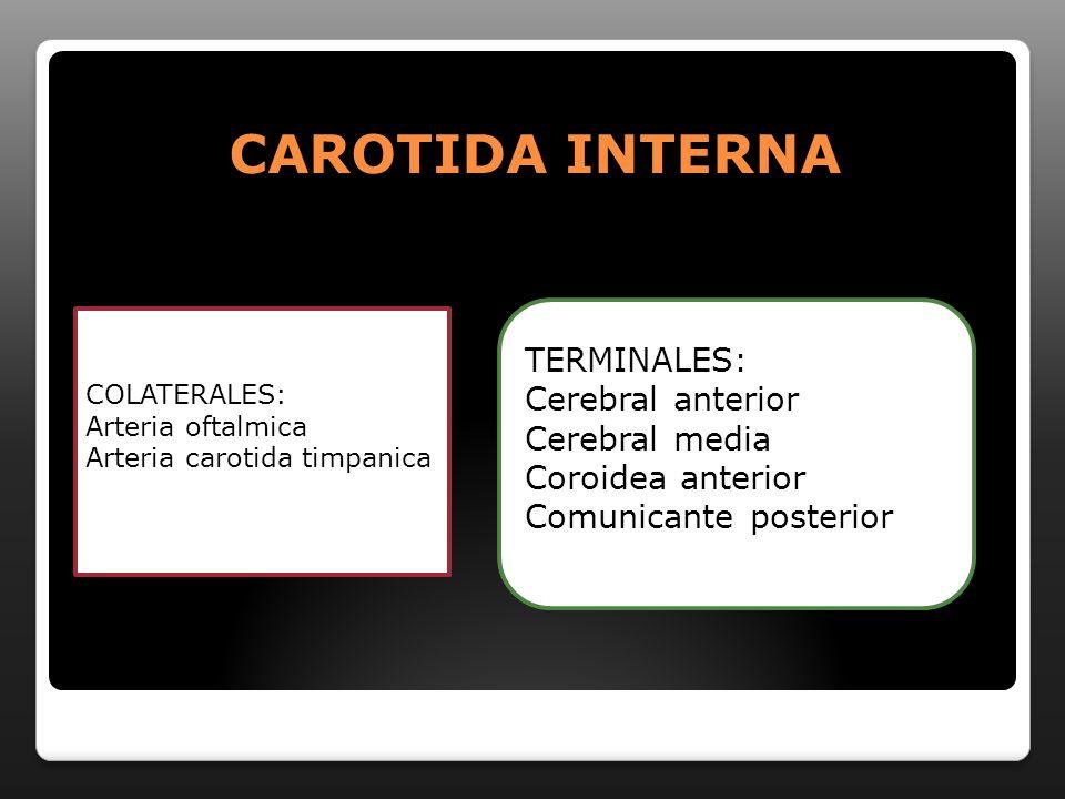CAROTIDA INTERNA COLATERALES: Arteria oftalmica Arteria carotida timpanica TERMINALES: Cerebral anterior Cerebral media Coroidea anterior Comunicante