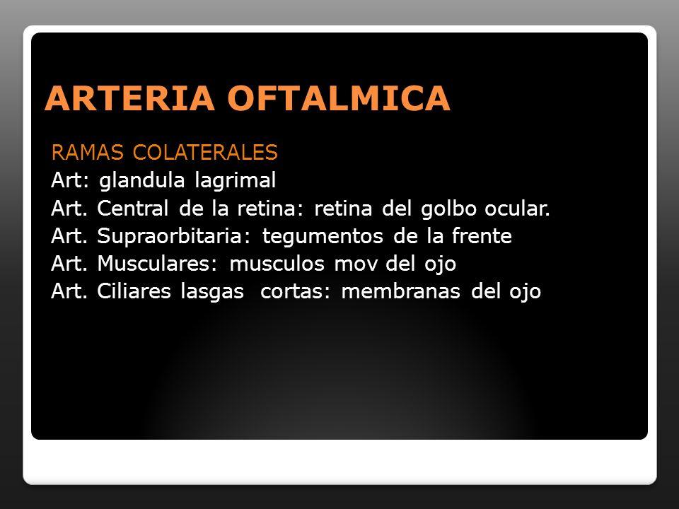 ARTERIA OFTALMICA RAMAS COLATERALES Art: glandula lagrimal Art. Central de la retina: retina del golbo ocular. Art. Supraorbitaria: tegumentos de la f