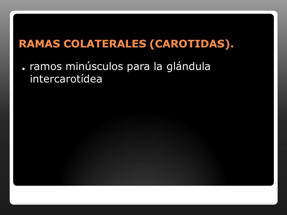 RAMAS TERMINALES (CAROTIDA) ARTERIA CAROTIDA COMUN PRIMITIVA A.
