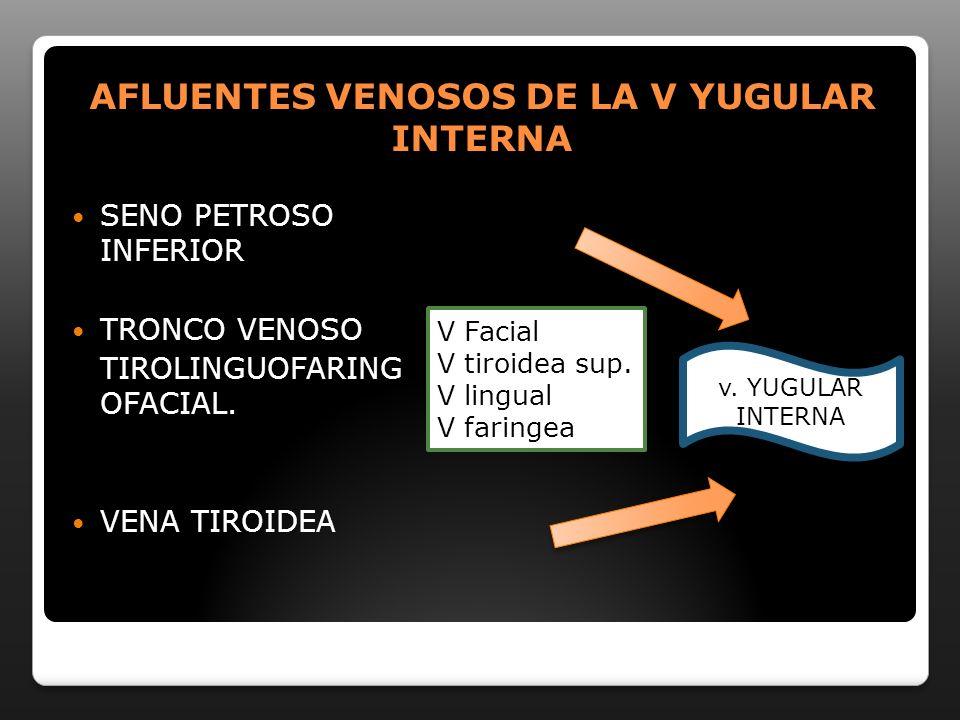 AFLUENTES VENOSOS DE LA V YUGULAR INTERNA SENO PETROSO INFERIOR TRONCO VENOSO TIROLINGUOFARING OFACIAL. VENA TIROIDEA V Facial V tiroidea sup. V lingu