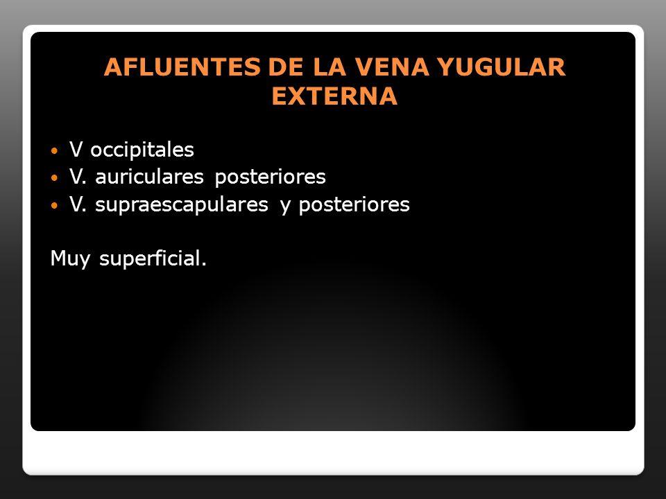 AFLUENTES DE LA VENA YUGULAR EXTERNA V occipitales V. auriculares posteriores V. supraescapulares y posteriores Muy superficial.