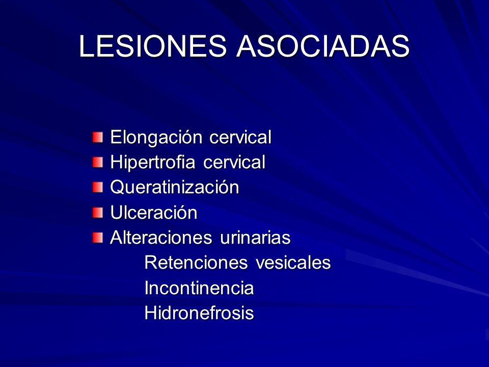 LESIONES ASOCIADAS Elongación cervical Hipertrofia cervical QueratinizaciónUlceración Alteraciones urinarias Retenciones vesicales Retenciones vesical