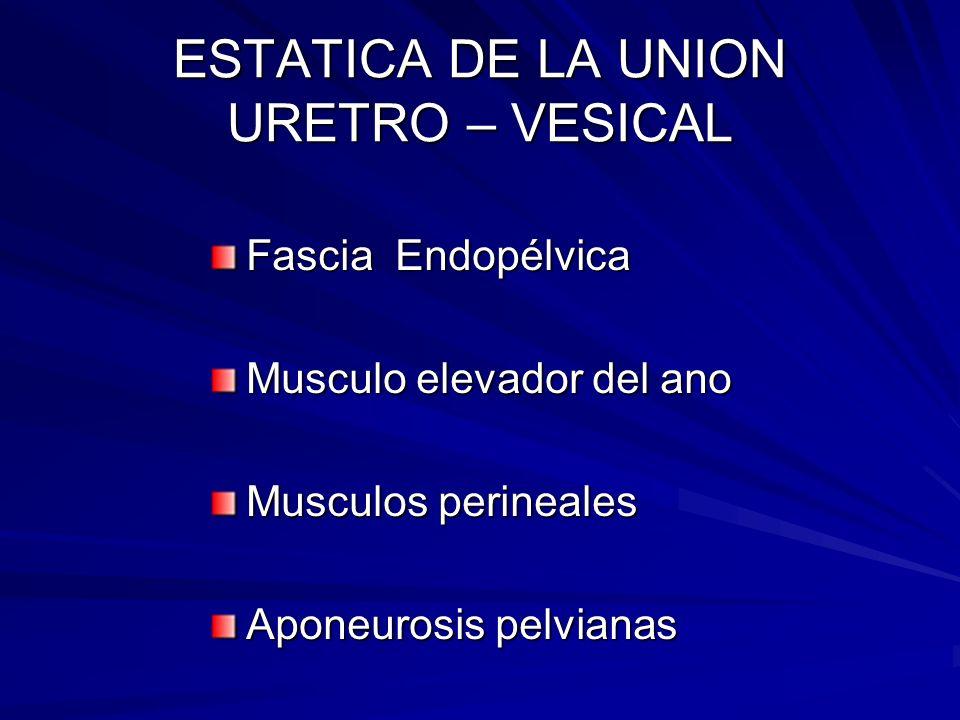 ESTATICA DE LA UNION URETRO – VESICAL Fascia Endopélvica Musculo elevador del ano Musculos perineales Aponeurosis pelvianas