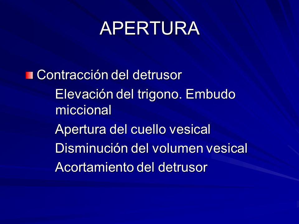 APERTURA Contracción del detrusor Elevación del trigono. Embudo miccional Elevación del trigono. Embudo miccional Apertura del cuello vesical Apertura