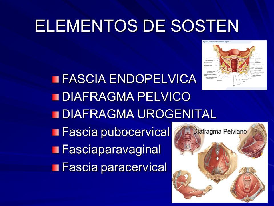 ELEMENTOS DE SOSTEN FASCIA ENDOPELVICA DIAFRAGMA PELVICO DIAFRAGMA UROGENITAL Fascia pubocervical Fasciaparavaginal Fascia paracervical