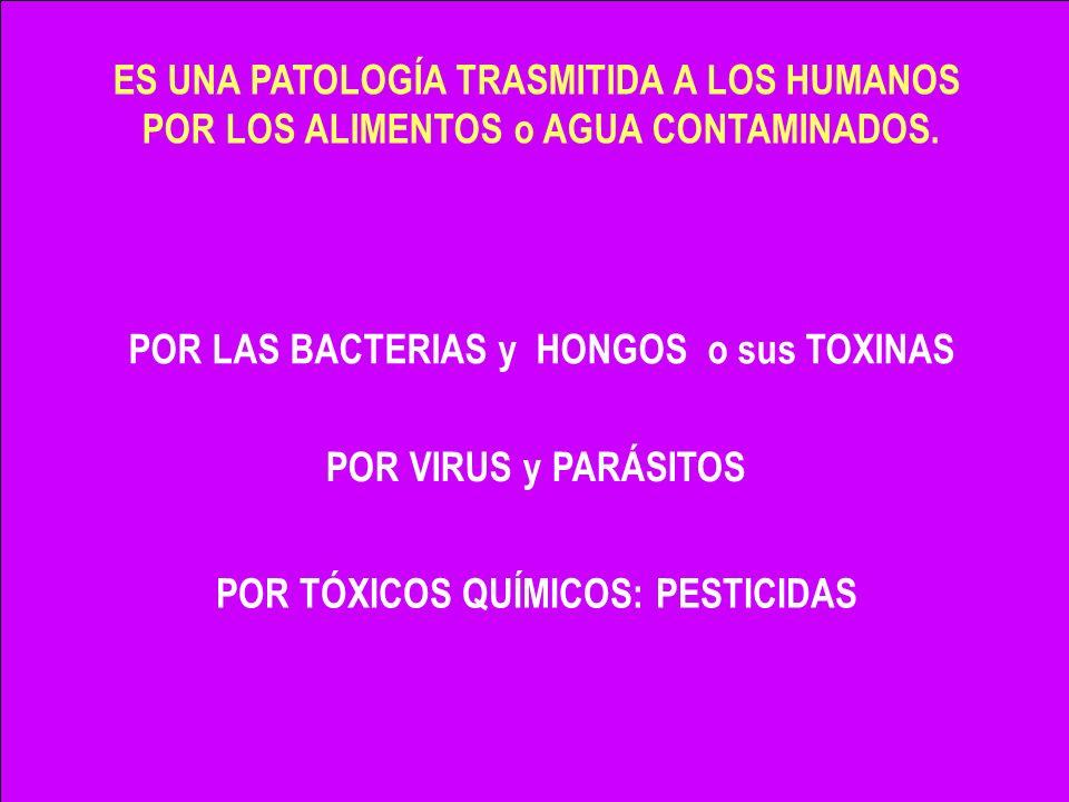 -Libra al alimento de microorganismos patógenos -Mantiene el producto con su textura, sabor y frescura.