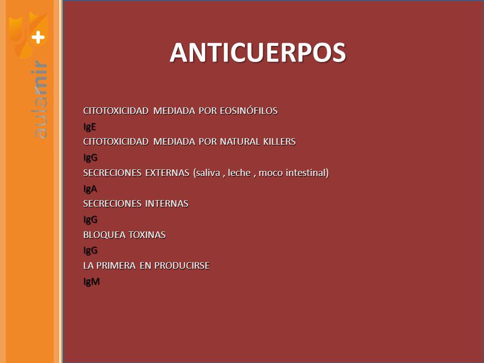 ANTICUERPOS CITOTOXICIDAD MEDIADA POR EOSINÓFILOS IgE CITOTOXICIDAD MEDIADA POR NATURAL KILLERS IgG SECRECIONES EXTERNAS (saliva, leche, moco intestinal) IgA SECRECIONES INTERNAS IgG BLOQUEA TOXINAS IgG LA PRIMERA EN PRODUCIRSE IgM